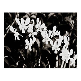 Little White Orchids Postcard