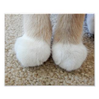 Little White Paws Photo Print