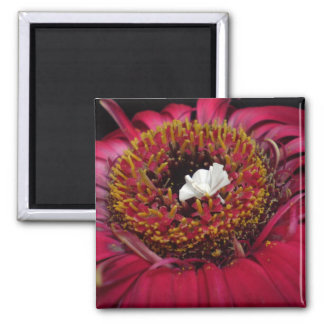 Little White Peacock in a Field of Color 2 Inch Square Magnet