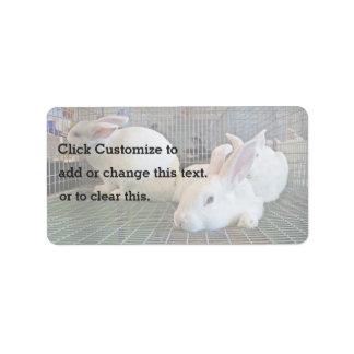 Little white rabbits label