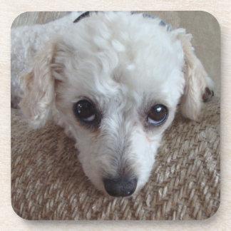 Little White Teacup Poodle Dog Coaster