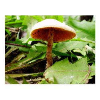 Little Wild Mushroom Postcard