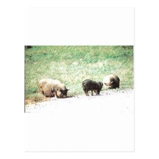 Little Wild Pigs Sketch Postcard