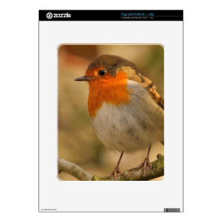 Little Winter Robin Skin For iPad