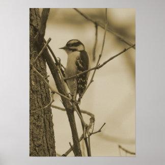Little woodpecker poster