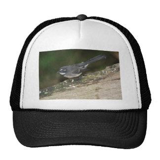 little wren series trucker hat