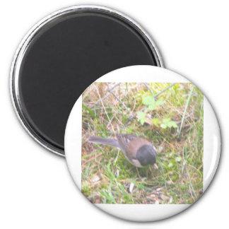 Little Yard Bird Magnet