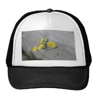 Little Yellow Flower #3 Mesh Hats