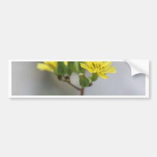 Little Yellow Flower #4 Bumper Sticker