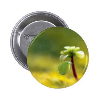 Little Yellow Sedum Pinback Button