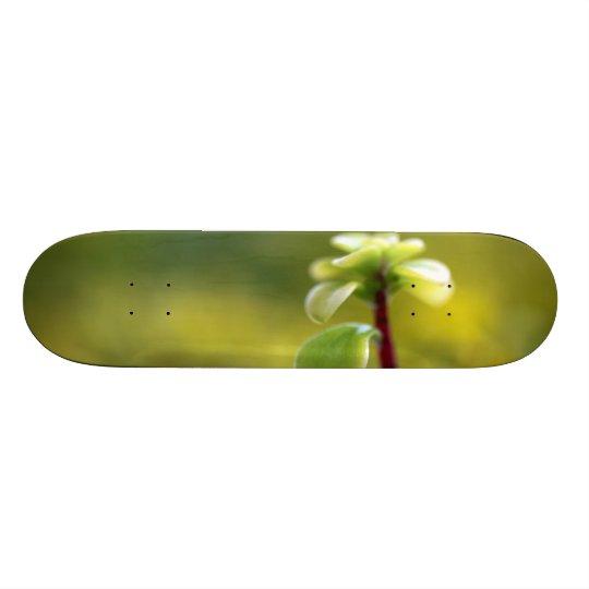 Little Yellow Sedum Skateboard Deck