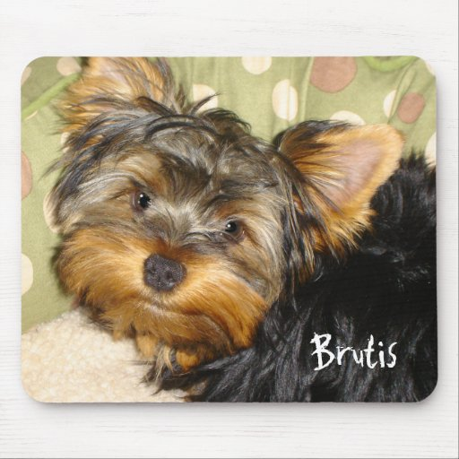 Little Yorkie Mouse Pad