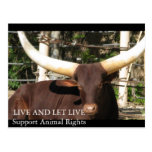 LIVE AND LET LIVE SUPPORT ANIMAL RIGHTS POST CARD