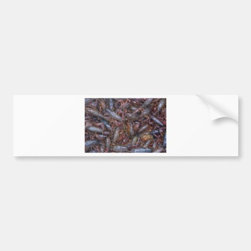 live crawfish bumper sticker