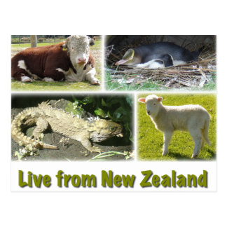Live from New Zealand Post Card