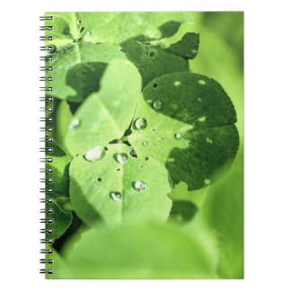 Live In Clover Notebook