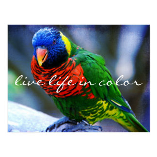 """""""Live in color"""" red blue green bird photo postcard"""