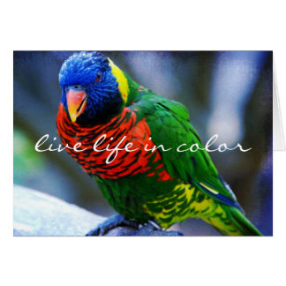 """""""Live in color"""" red green bird photo blank inside Card"""