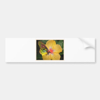 Live in the Moment Butterfly on Flower Designs Bumper Sticker
