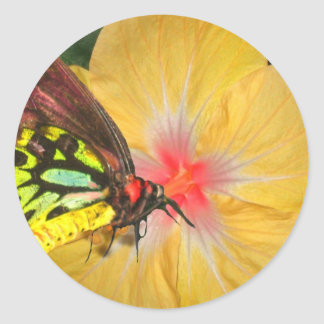 Live in the Moment Butterfly on Flower Designs Classic Round Sticker