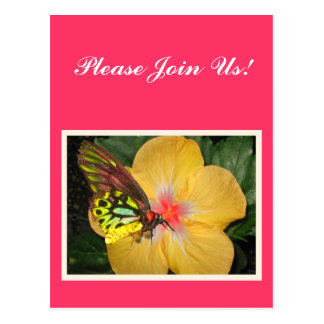 Live in the Moment Butterfly on Flower Designs Postcard