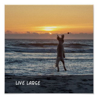 """Live Large"" Beach Sunset Poster (12"" x 12"")"