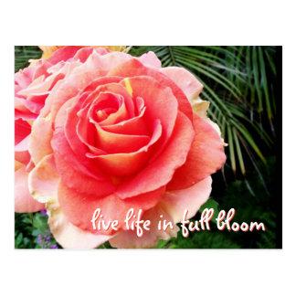 """Live life"" inspiration quote huge pink rose photo Postcard"