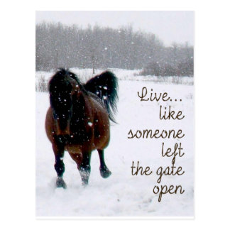 Live Life.....Like someone left the gate open! Postcard