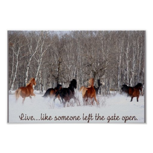 Live Like Someone Left The Gate Open Quote: Live Life.....Like Someone Left The Gate Open! Poster
