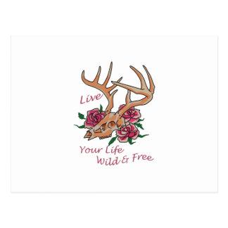 Live Life Wild And Free Postcard