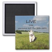 Dog Quotes Posters Amp Photo Prints Zazzle