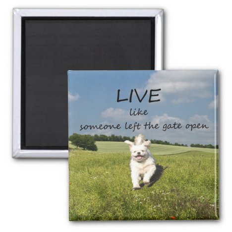 """Live Like Someone Left the Gate Open"" Magnet"