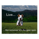 """Live Like Someone Left the Gate Open"" Poster"