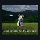 """&quot;Live Like Someone Left the Gate Open&quot; Poster<br><div class=""""desc"""">An inspiring poster featuring a beautiful,  vibrant photo of a dog bounding through a field,  with an expression of pure joy and freedom,  and the phrase: &quot;Live...  like someone left the gate open.&quot;</div>"""