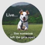 Live Like Someone Left the Gate Open Round Sticker