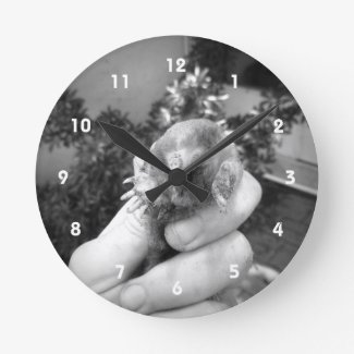 Live mole in hand smiling animal black white wallclocks