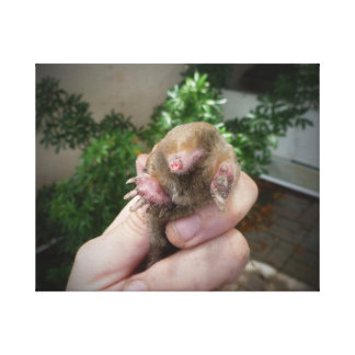 Live mole in hand smiling.jpg canvas print