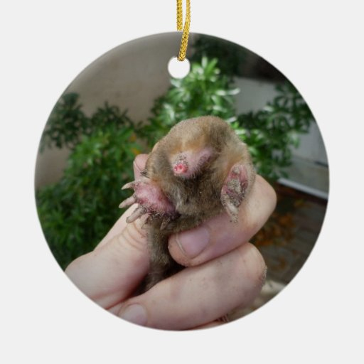 Live mole in hand smiling.jpg Double-Sided ceramic round christmas ornament