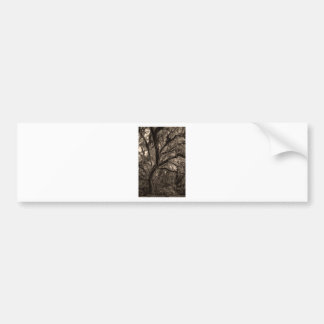 Live Oak and Spanish Moss in Sepia Tones Bumper Sticker