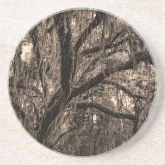Live Oak and Spanish Moss in Sepia Tones Drink Coaster