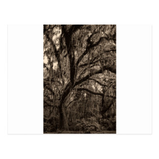 Live Oak and Spanish Moss in Sepia Tones Postcard