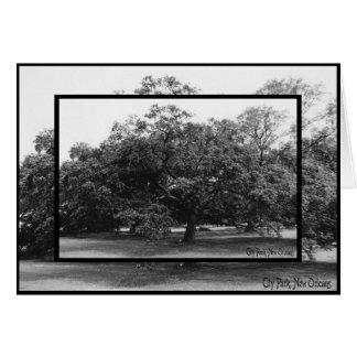 live oak at city park card