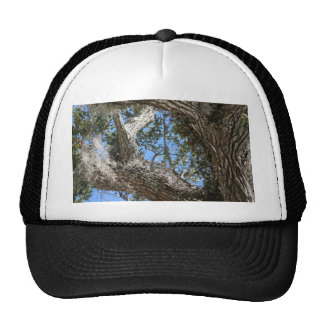 live oak  bark and sky view nature photograph trucker hat