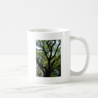 Live Oak In Downtown Savannah Coffee Mug