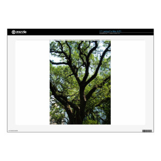Live Oak In Downtown Savannah Decals For Laptops