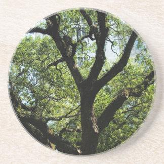 Live Oak In Downtown Savannah Sandstone Coaster