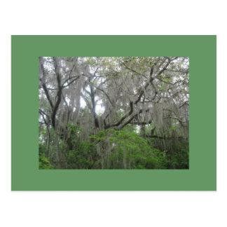 Live Oak Moss Postcard