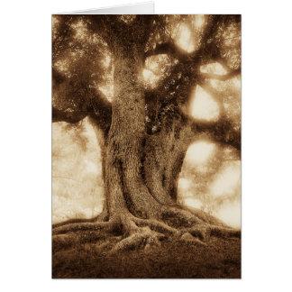 Live Oak - MW1101 Card
