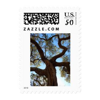 Live Oak Postage