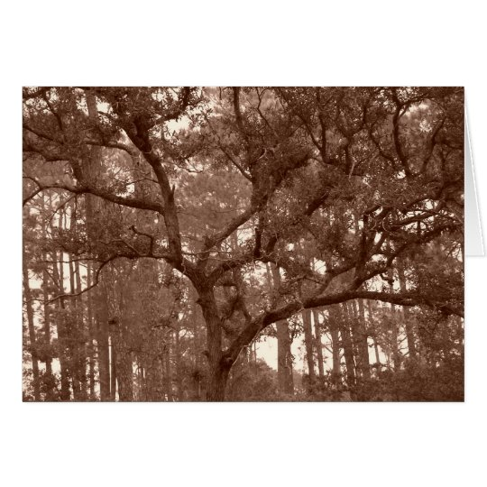 LIVE OAK SEPIA CARD